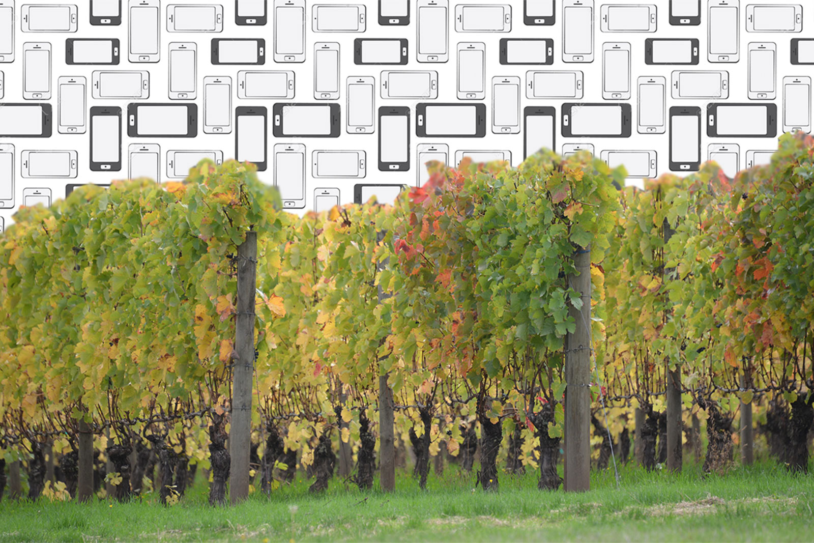 Mobile Responsive Websites for Wineries