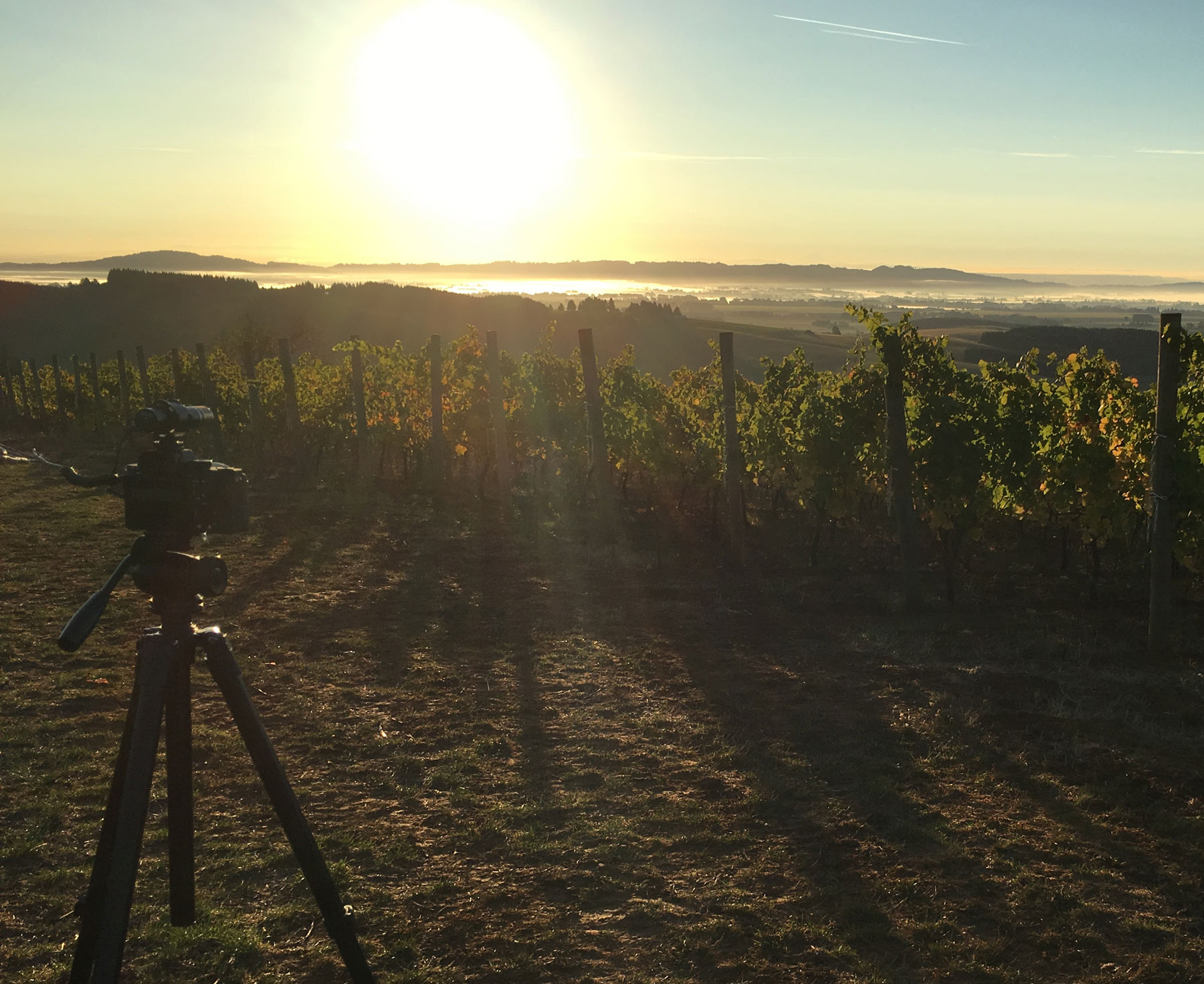 Video Producer for Winery