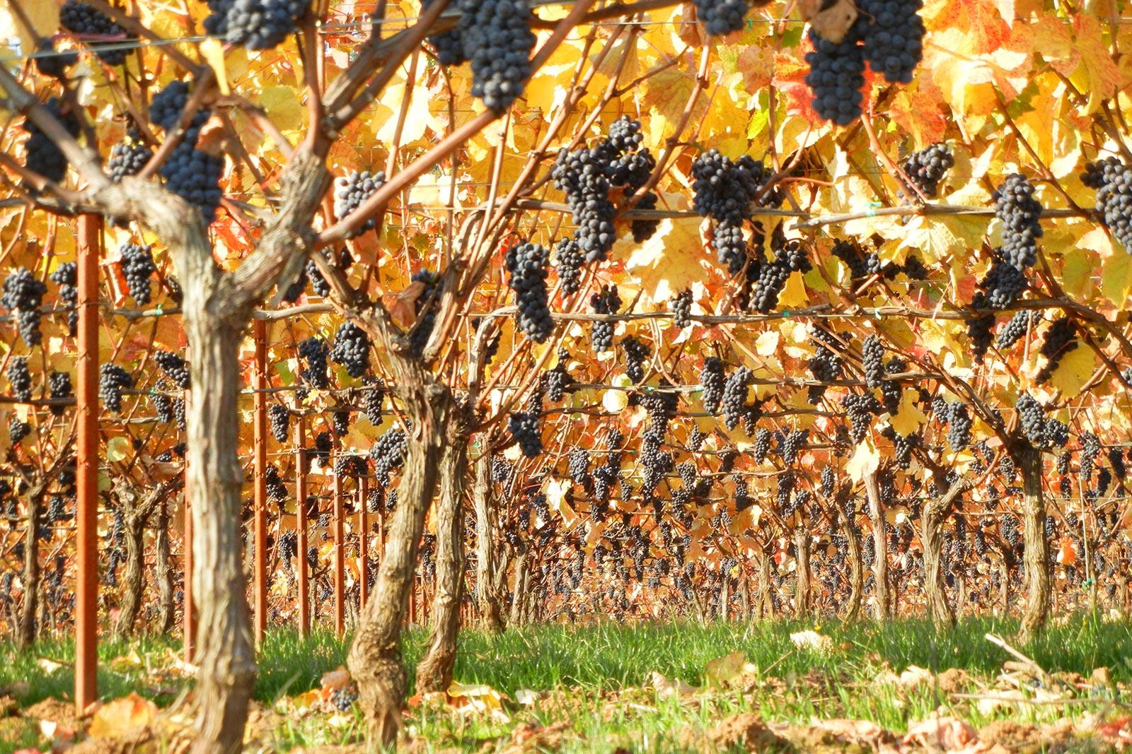 Oregon Wine Photographer Brian Richardson Vinbound Marketing