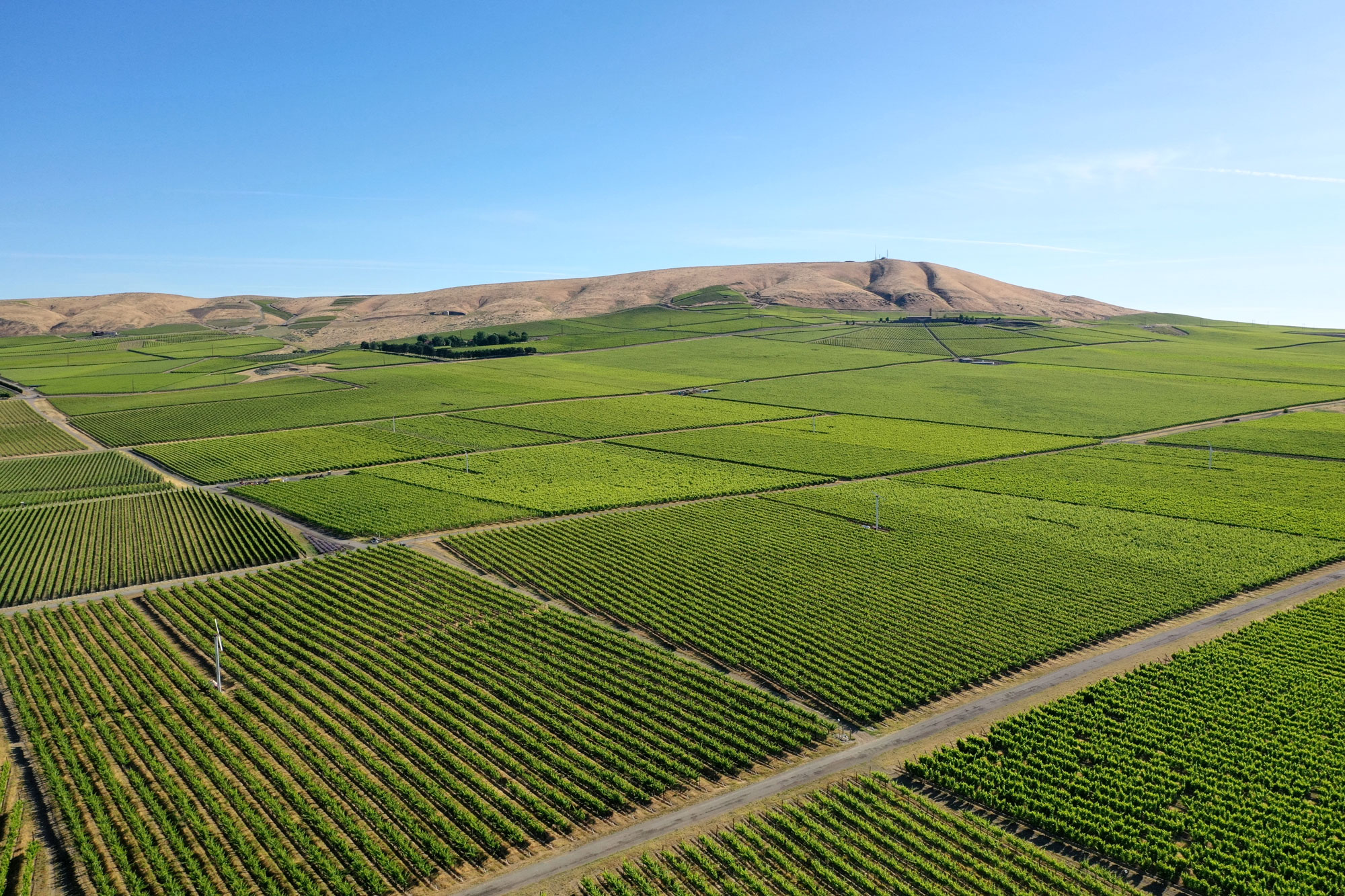 Red Mountain, Washington state vineyards from the air