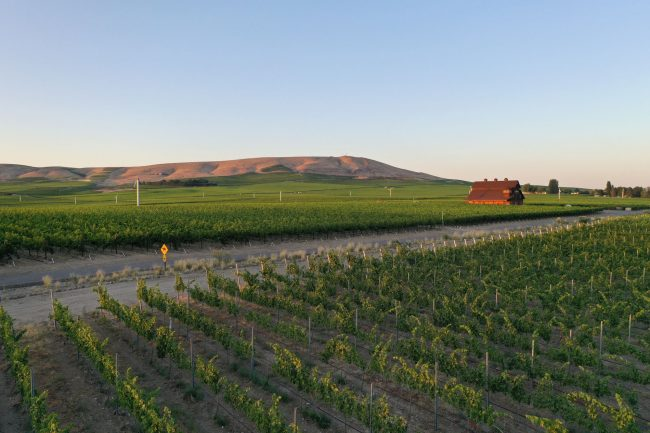 Vineyard in Washington's Red Mountain region