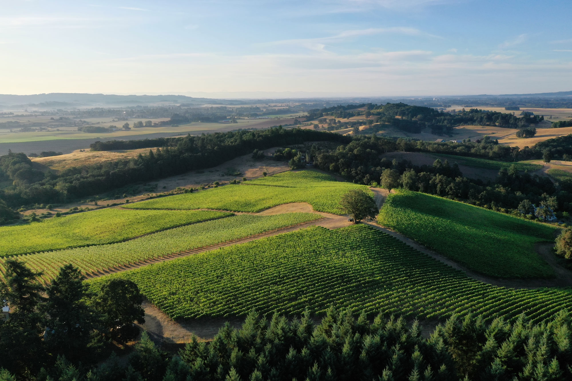 Yamhill-Carlton vineyard from the air