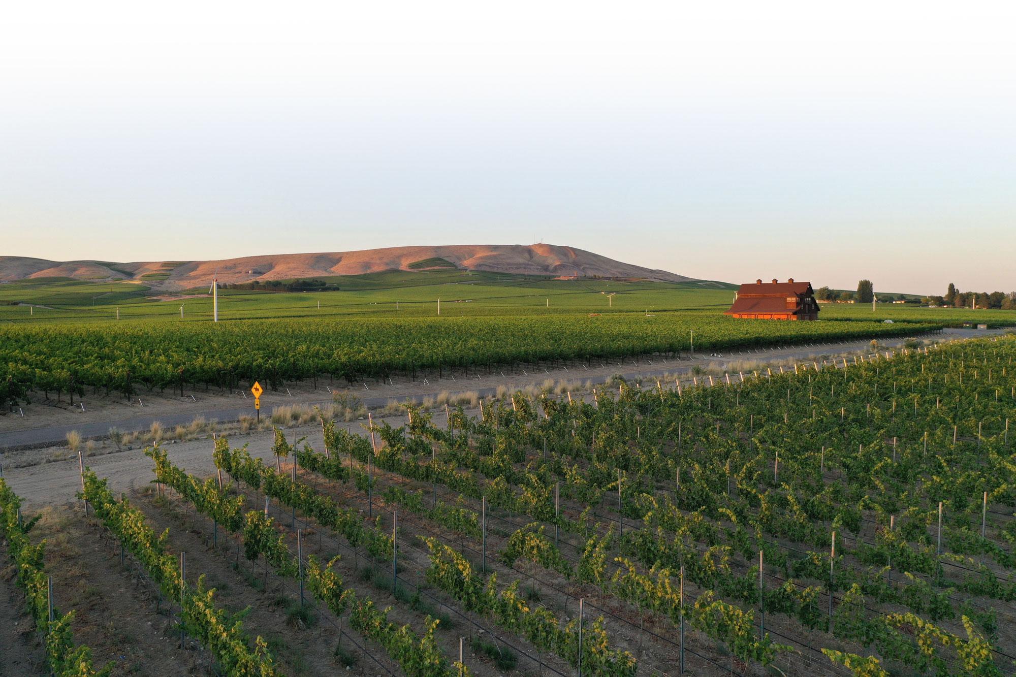Vineyard in Washington's Red Mountain region