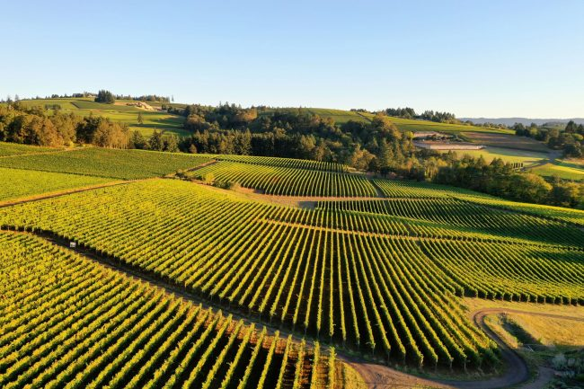 Aerial photography of wineries and vineyards